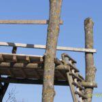 Schrauben durch Baumstamm für Jägerstand