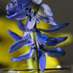Blau 24erf5,6