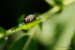Fliege auf Blatt von vorn