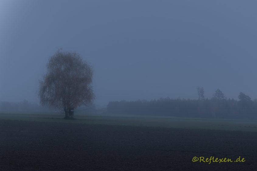 Dämmerung mit Nebel nach Regen