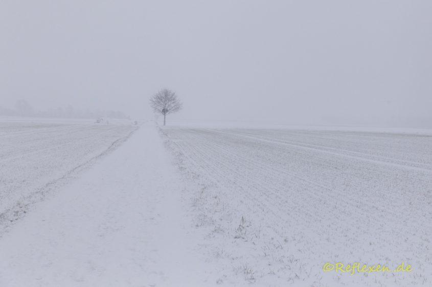 Schneegestöber in den Feldern