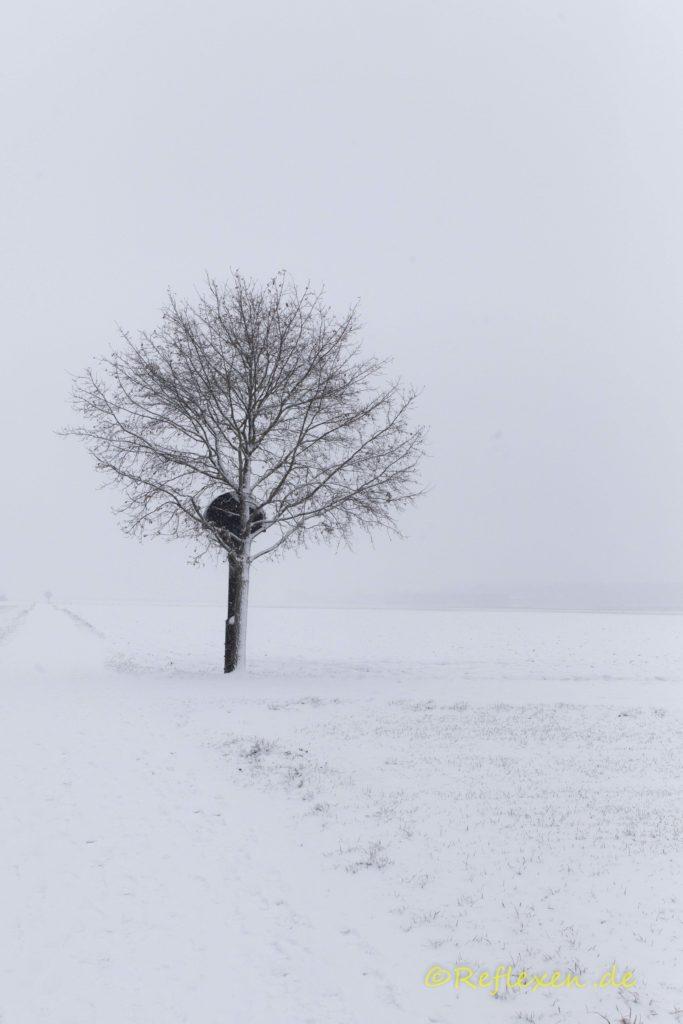 Schneegestöber mit Feldbaum