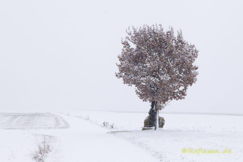 Feldbaum im Schneegestöber quer